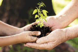 Supporting Environmental Sustainability in Palestine